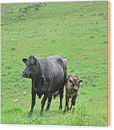 Cow With Calf On Thorpe Hillside Wood Print
