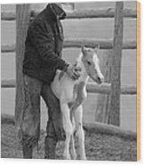 Cowboy Steadies Foal Wood Print