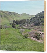 Cows Along The Rolling Hills Landscape Of The Black Diamond Mines In Antioch California 5d22294 Wood Print
