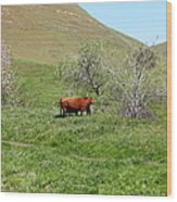 Cows Along The Rolling Hills Landscape Of The Black Diamond Mines In Antioch California 5d22303 Wood Print by Wingsdomain Art and Photography