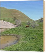Cows Along The Rolling Hills Landscape Of The Black Diamond Mines In Antioch California 5d22304 Wood Print