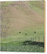 Cows Along The Rolling Hills Landscape Of The Black Diamond Mines In Antioch California 5d22319 Wood Print by Wingsdomain Art and Photography