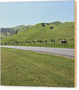 Cows Along The Rolling Hills Landscape Of The Black Diamond Mines In Antioch California 5d22326 Wood Print by Wingsdomain Art and Photography