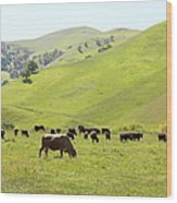 Cows Along The Rolling Hills Landscape Of The Black Diamond Mines In Antioch California 5d22328 Wood Print