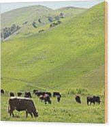 Cows Along The Rolling Hills Landscape Of The Black Diamond Mines In Antioch California 5d22329 Wood Print