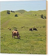 Cows Along The Rolling Hills Landscape Of The Black Diamond Mines In Antioch California 5d22350 Wood Print by Wingsdomain Art and Photography