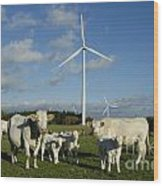 Cows And Windturbines Wood Print