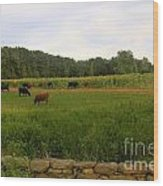 Cows At Buttonwood Wood Print by Dorothy Drobney
