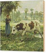 Cows At Pasture  Wood Print