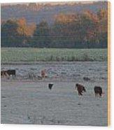 Cows At Sunrise Wood Print