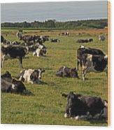 Cows At Work 1 Wood Print