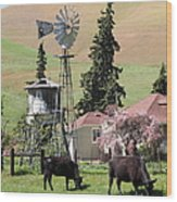 Cows Home On The Ranch At The Black Diamond Mines In Antioch California 5d22354 Wood Print by Wingsdomain Art and Photography