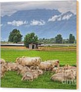 Cows On The Green Field Wood Print