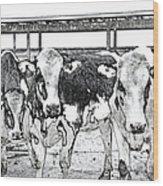 Cows Pencil Sketch Wood Print