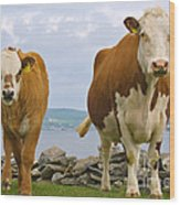 Cows Wood Print by Terry Whittaker
