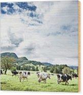 Cows Walk In Beautiful Paddock Wood Print