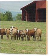 Cows8918 Wood Print