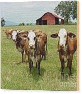 Cows8931 Wood Print