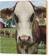 Cows8957 Wood Print