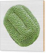 Cowslip Pollen Grain, Sem Wood Print