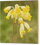 Cowslip   Primula Veris Wood Print