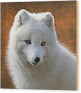 Coy Arctic Fox Wood Print