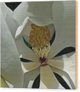 Coy Magnolia Wood Print
