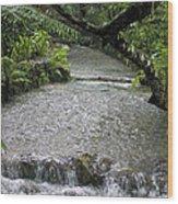 Coyaba River Gardens 6 Wood Print