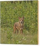 Coyote Happy Wood Print