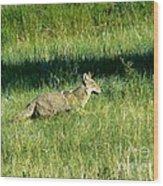 Coyote In Boulder Higlands Wood Print
