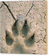 Coyote Print Wood Print