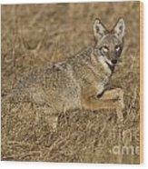Coyote Running Wood Print