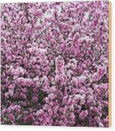 Crab Apple Tree Wood Print