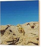 Crab Climb Blowing Sand 8/24 Wood Print
