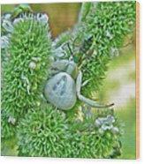 Crab Spider - Thomisidae Wood Print