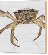 Crab Suriname Wood Print