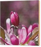 Crabapple Bud Wood Print