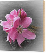 Crabapple Flower Wood Print