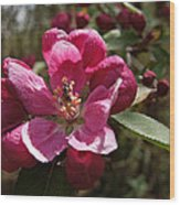 Crabapple Insect Wood Print