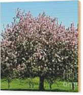 Crabapple Orchard Wood Print