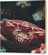 Crabs 1 Wood Print