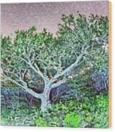 Craggy Gardens North Carolina Blue Ridge Parkway Autumn Nc Sceni Wood Print