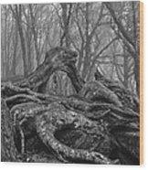 Craggy Roots Wood Print