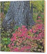 Cranberry Bush And Cottonwood Tree Wood Print