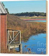 Cranberry Harvest  Wood Print by Catherine Reusch Daley