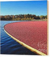 Cranberry Harvest In New Jersey Wood Print by Olivier Le Queinec