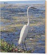 Crane At Pond Wood Print
