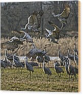 Crane Landing Strip Wood Print