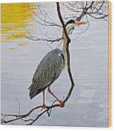 Crane Perching 2 Wood Print by John Magnet Bell