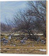 Cranes And Mixed Ducks Wood Print